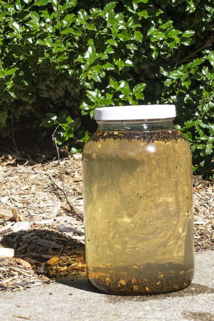 Cinnamon Spice Sun Tea